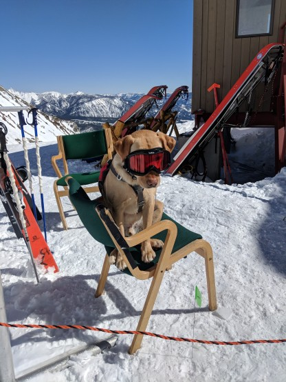 Meet Boomer, He is ready to serve the mountain